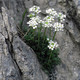 Flores sobre rocas