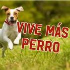 Vive más perro