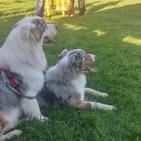 Más de treinta perros se dan cita en Canimellera