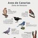Los sonidos de las aves de Canarias [20181207]
