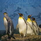 Perpetuum Mobile. Episodio 65. 20 años sin Simon Jeffes, fundador de la Penguin Cafe Orchestra