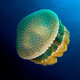Aparici en Órbita s02e41: Las medusas, un superdepredador del pasado