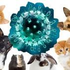 127 - Flash Coronavirus: Pueden transmitir nuestras mascotas el SARS COV-2? Lo que se sabe a 3 de abril de 2020