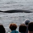 Ver ballenas en Santurtzi es fácil con Gorka Ocio