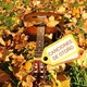 Viaje Especial. Canciones de Otoño. De Tom Waits a Led Zeppelin. De Lou Reed a White Stripes. De Small Faces a...