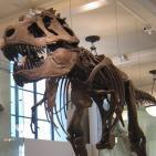 Grandes misterios del museo de Historia Natural