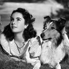 Trotamundos - Perros de cine