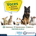 Voces del Reino Animal- Consulta médica veterinaria preventiva