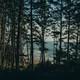 Episodio 2 ¿Podemos salvar nuestros bosques utilizando más madera? #NoEsCosaDeHippies