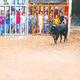 Castelló tanca una temporada marcada per bous de major qualitat