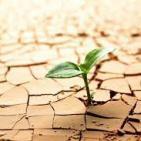 Historias de un jueves 4: Resiliencia