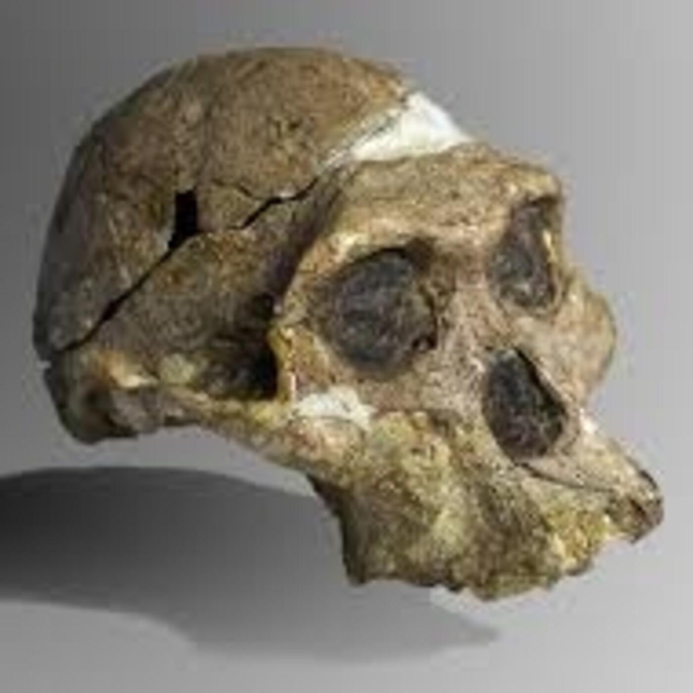 241 - Rep. Evolución Humana 1: El Misterio del Origen Humano