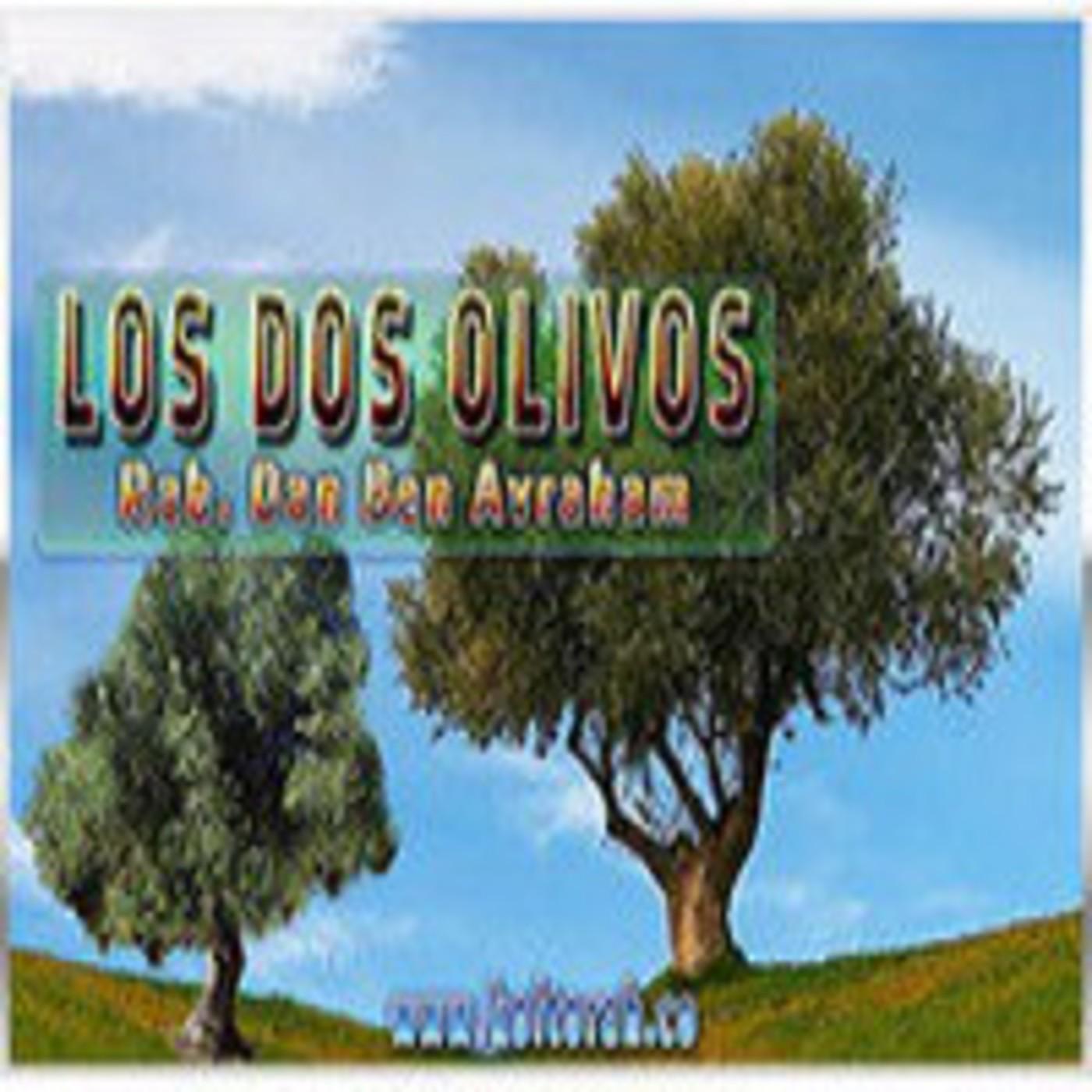 El misterio de los dos olivos – Dr. Dan Ben Avraham