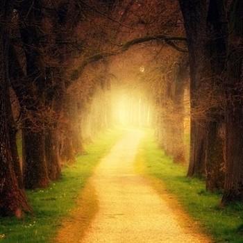 Budismo práctico: Fantasías y realidades del camino espiritual
