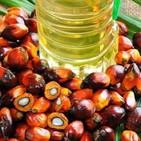 #2 ¿Es mala la grasa o aceite de palma?