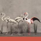 NATURALEZAS RECREADAS (I). Humboldt, Haeckel y los Benedito. La naturaleza en cuadros, láminas y vitrinas