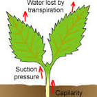 How Do Plants Drink Or Transpiration | Science Explained | Prof. Jaime Demick