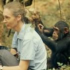 Contacto Tierra 49: Jane Goodall, inspiración para el mundo