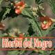El Ángel de tu Salud - HIERBA DEL NEGRO III
