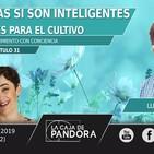 LAS PLANTAS SI SON INTELIGENTES: Claves para el cultivo – Lucy Gómez y Vero Fernandez