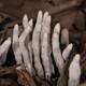 La Brújula de la Ciencia s09e42: La extinción del Pérmico y su efecto sobre los bosques