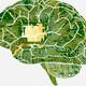Digitalizar el cerebro: la inmortalidad humana