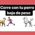 Obesidad y sobrepeso en perros