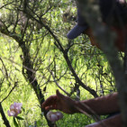 Rutas por Extremadura 2x05 - Reserva de Caza de Cijara