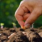 La importancia de plantar semillas del terreno