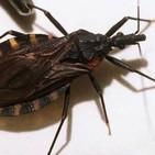 P179: Tiroteo en Texas. El peligroso insecto Vinchuca.