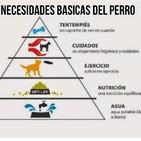 Necesidades básicas del perro