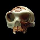 La Brújula de la Ciencia s09e30: El lugar de Homo antecessor en la evolución humana