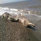 Extraña criatura encontrada en las costas de Rusia