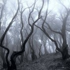 Palos y Piedras y Poca Salsa. Ep 3 - Bosques y sus cuentos