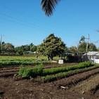 Validan en Camagüey Movimiento de la Agricultura Suburbana