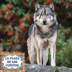 El lobo solitario - La Plaza de los Cuentos