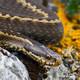 La Luciérnaga 13-05-20 Serpientes, perseguidas sin motivo