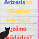 Artrosis en nuestros perros y gatos | Tips para cuidarlos :)