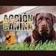 Acción Canina Radio 33