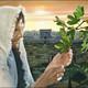 Comentarios y oraciones con el Evangelio en Mc 13, 24-32 domingo XXXIII° del TO B, 18 de noviembre 2018