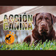 Acción Canina 18