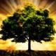 Cuento infantil - El árbol mágico