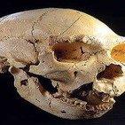 Atapuerca: laboratorio de la evolución humana. Entrev.a J.M Bermudez de Castro, Coodirector de Atapuerca.Prog 054. LFDLC