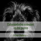 Victor Madera: enfermedades comunes en los perros