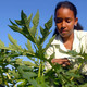 Historia de una mujer rural guantanamera