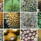 Arrecifes Coralinos y Cambio Climático