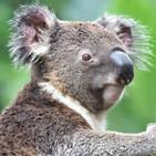 Carretera Perdida 123 - Malas Digestiones y Koalas On Fire