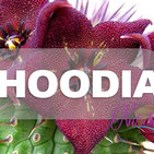Nutribella - HOODIA