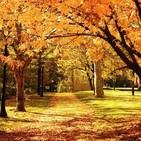 Mis hojas de noviembre