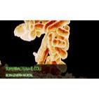 Superbacteria E. Coli